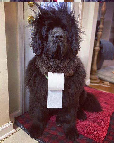 Thời trang tóc cho chó cưng