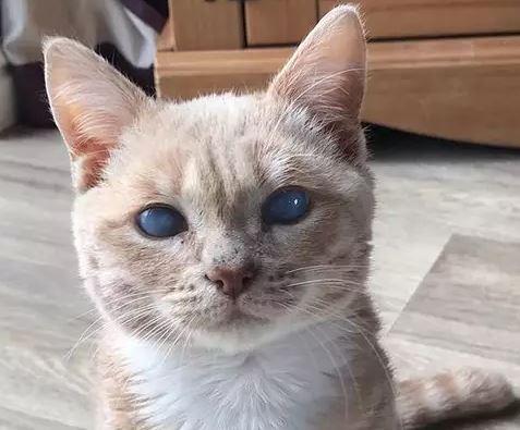 mèo con