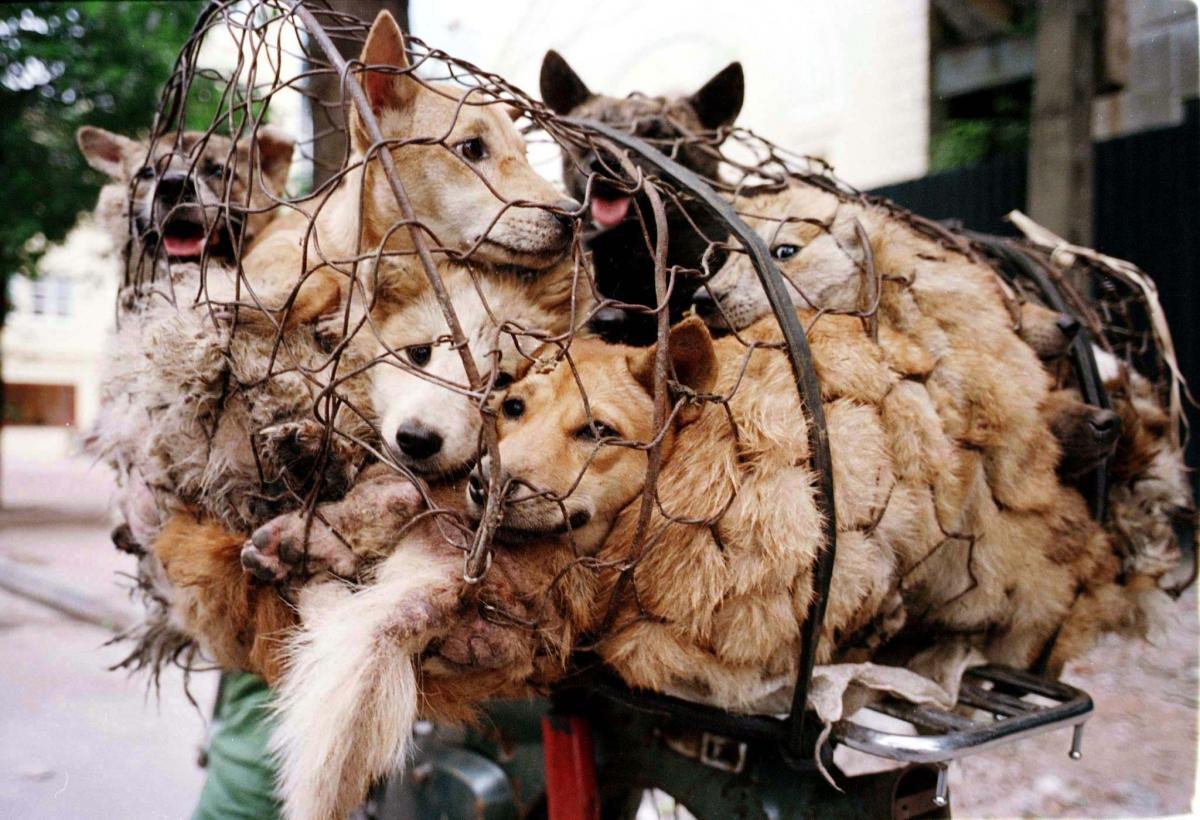cấm ăn thịt chó mèo