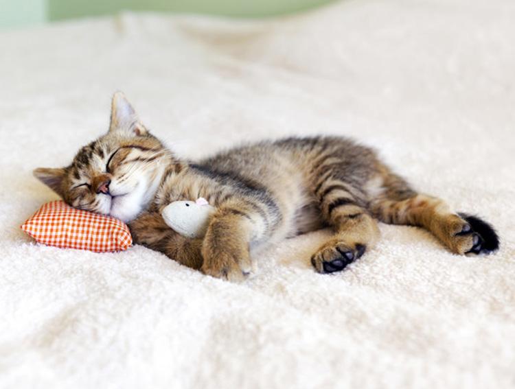 mèo không phá giấc ngủ