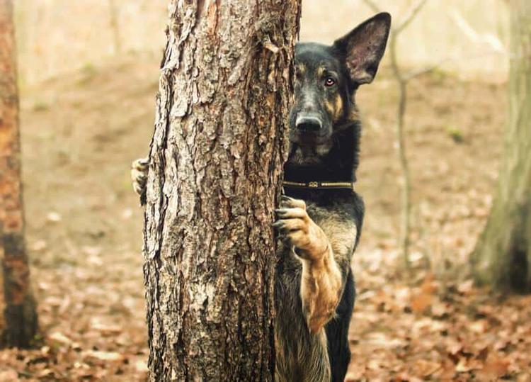 chó sợ nhất là gì