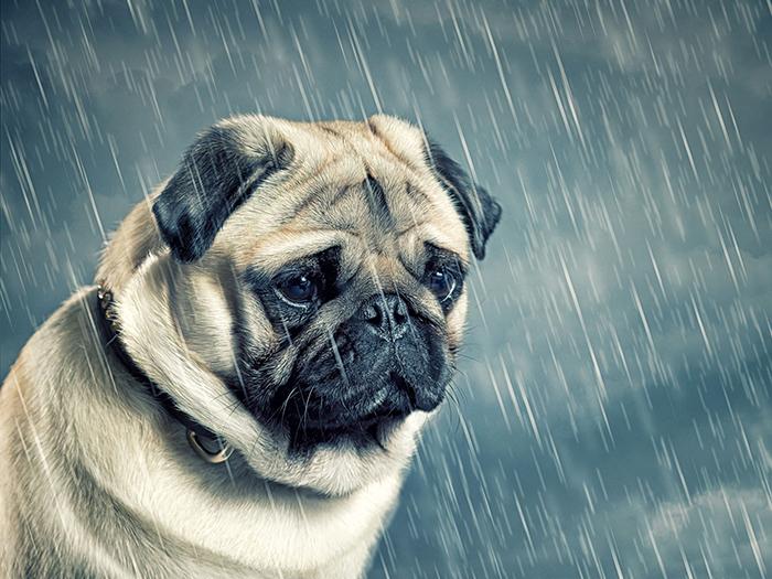 an ủi chó cưng