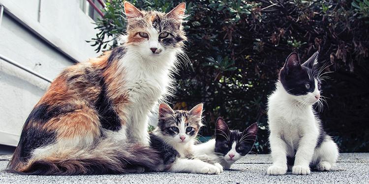 Luật bảo vệ thú nuôi