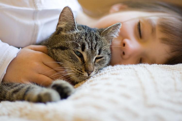 mèo ngủ vẫn phát ra tiếng kêu