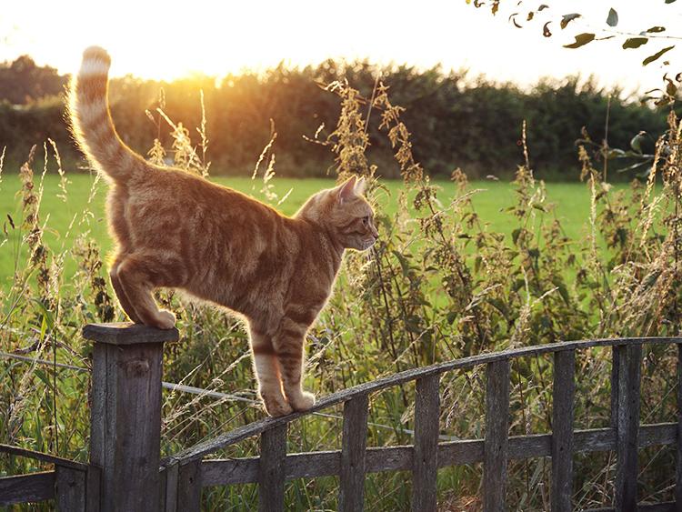 mèo sợ nhất mùi gì