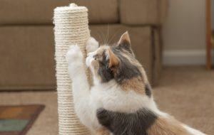 mèo cào đồ đạc