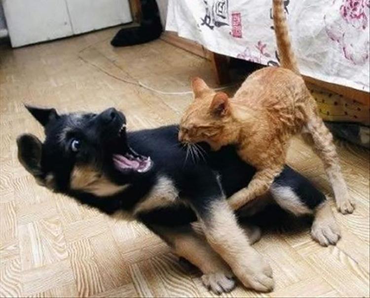 Chó mèo bị dại