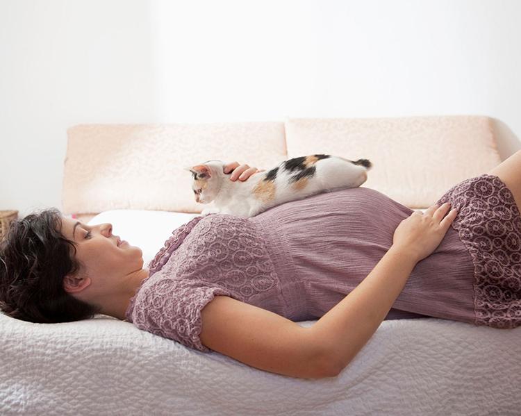 mèo nuôi trong nhà