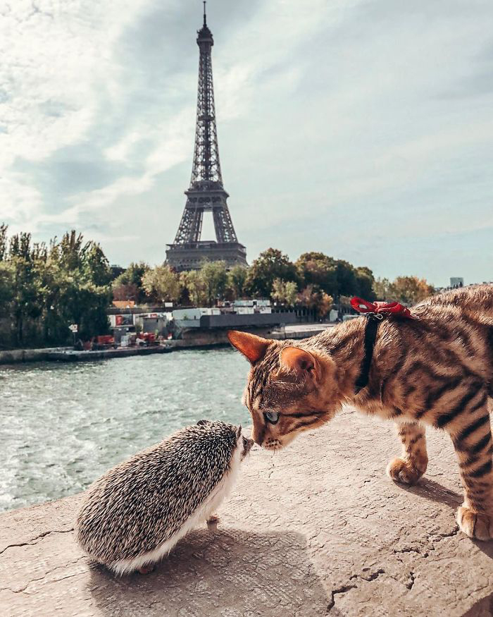cặp bạn mèo và nhím