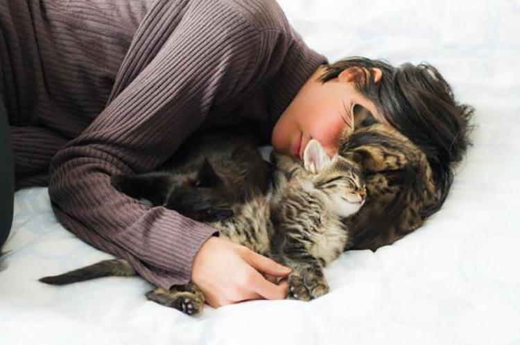 mèo ngủ
