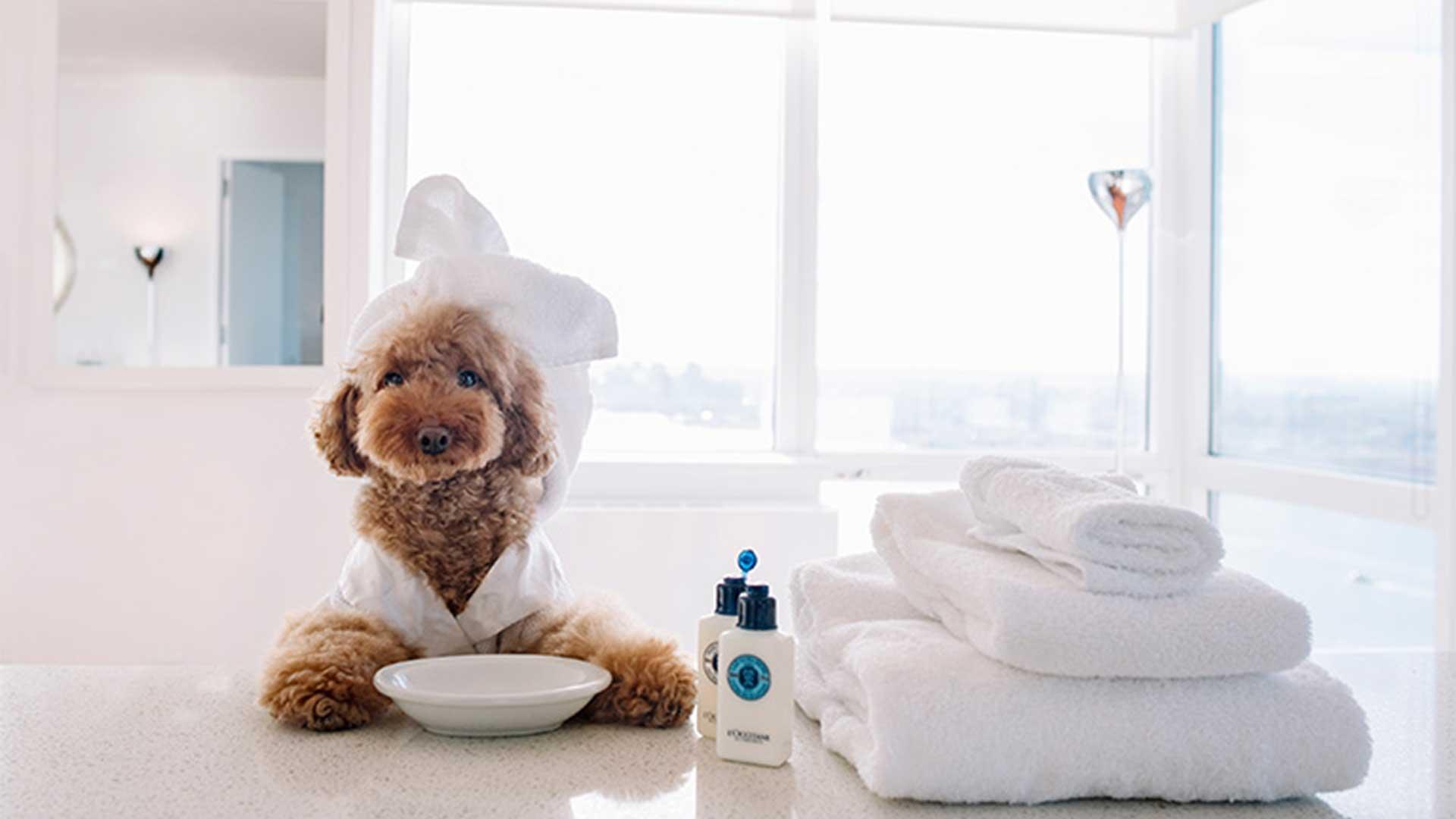 Đặt phòng khách sạn thú cưng MyPet
