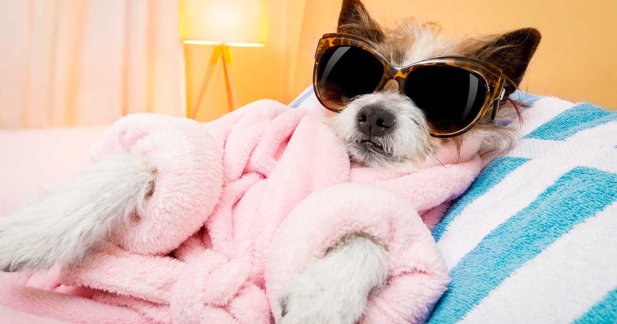 Tính năng đặt lịch Spa thú cưng của MyPet