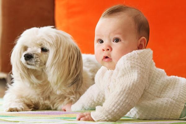 dạy trẻ khoảng cách an toàn với vật nuôi