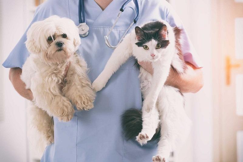 phụ kiện chó mèo