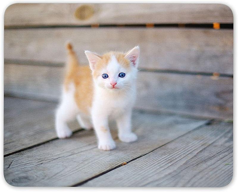 Kinh nghiệm chăm sóc cho mèo con bạn nên biết - Mypet App - Ứng dụng cho thú cưng