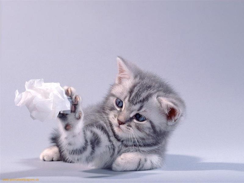 cho mèo con