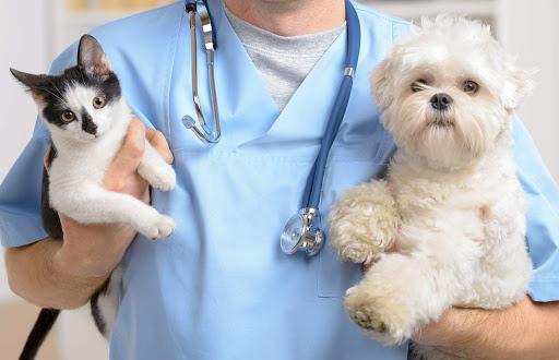 bệnh viện thú cưng