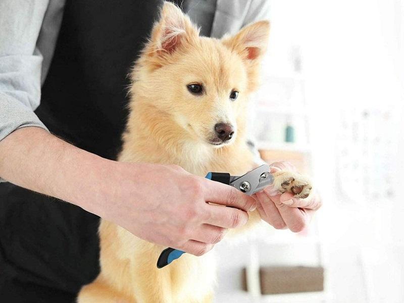 spa thú cưng