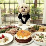 lợi ích khách sạn thú cưng MyPet