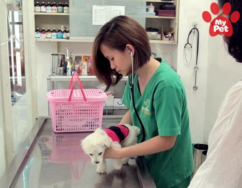 Bệnh viện thú y MyPet