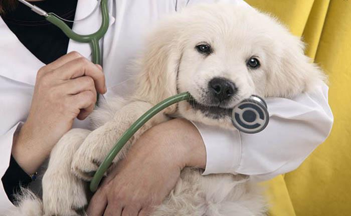 Đặt lịch phòng khám thú cưng