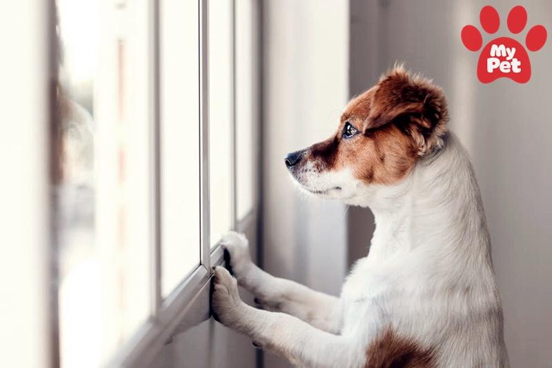 thú cưng bị bỏ rơi ở phòng khám