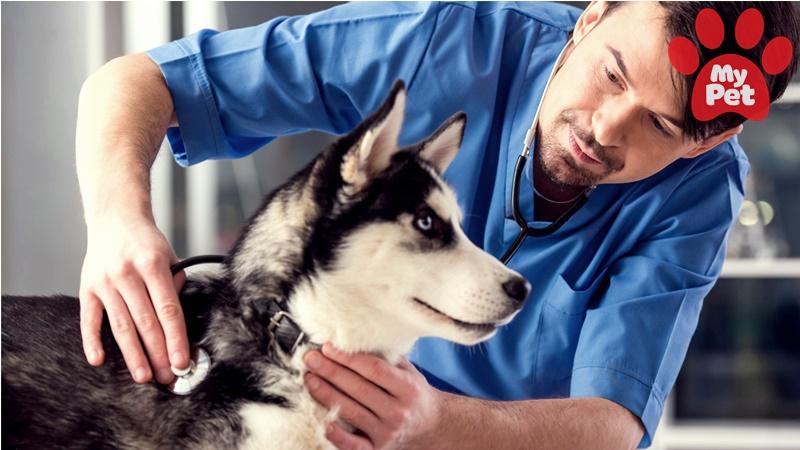 bệnh viện thú cưng MyPet