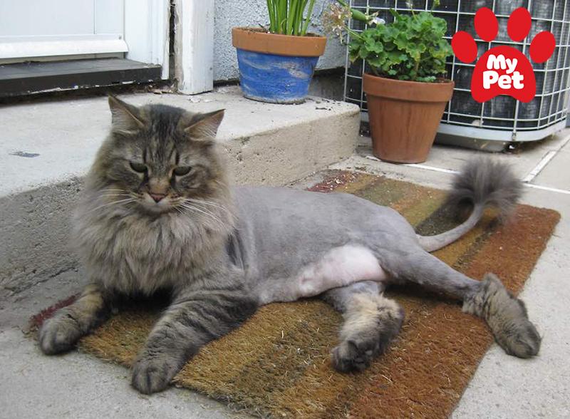 spa chó mèo