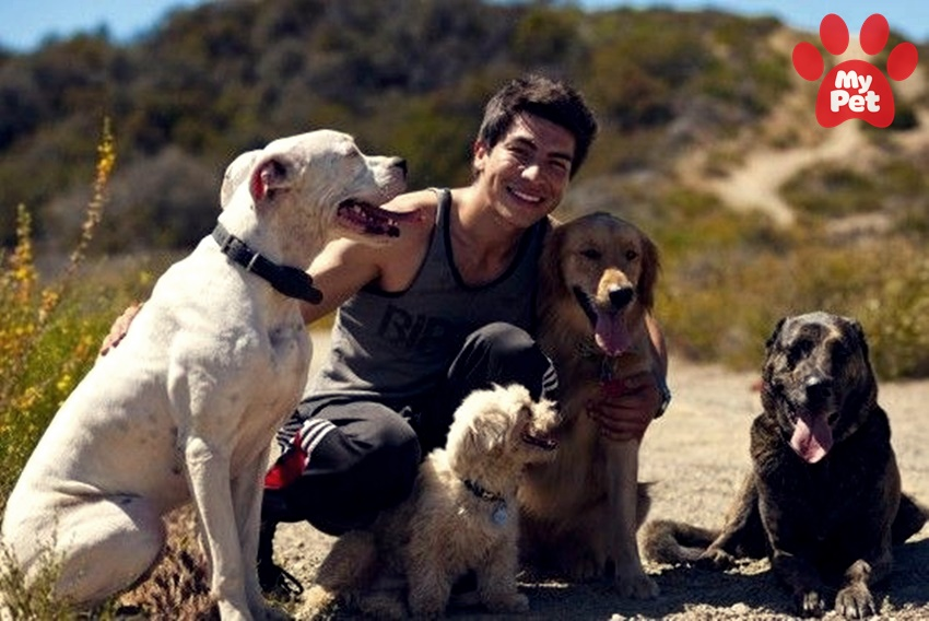 Top 5 khách sạn thú cưng sang chảnh nhất thế giới MyPet