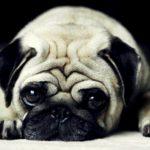 ứng dụng thú cưng