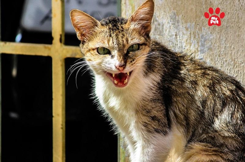 Bệnh dại ở mèo