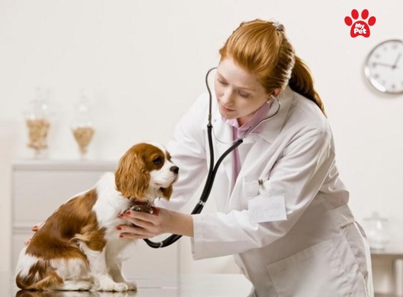 các bệnh thường gặp ở vật nuôi