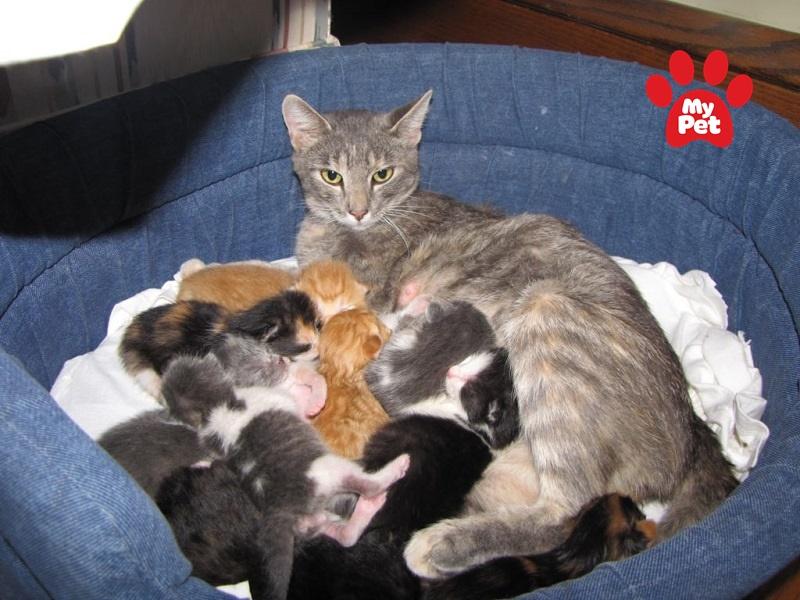Sữa mẹ là nguồn cung cấp dinh dưỡng tốt nhất cho mèo sơ sinh