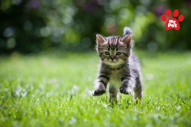 Kết hợp chế độ vận động cho mèo để đảm bảo sức khỏe