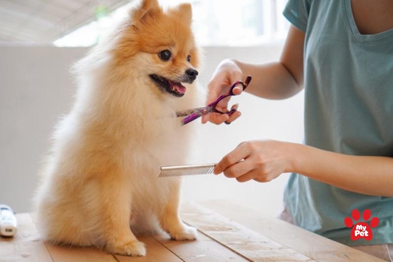 Chăm sóc chó