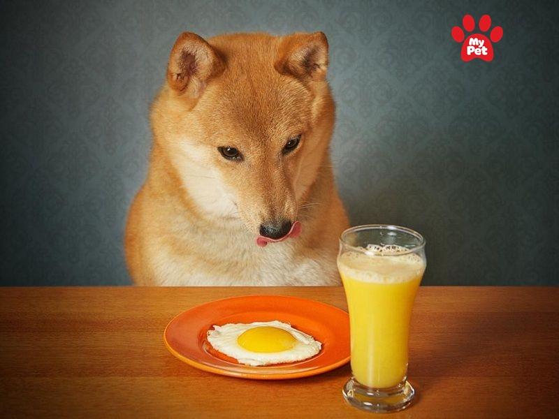 Nên cho chó ăn trứng gà chín để đảm bảo sức khỏe