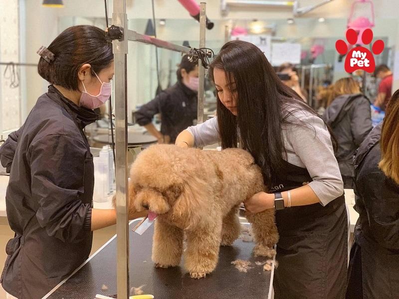 Thú cưng được chăm sóc cắt tỉa lông, móng tại spa