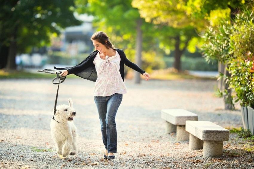 Dắt thú cưng đi dạo đem lại nhiều lợi ích cho sức khỏe