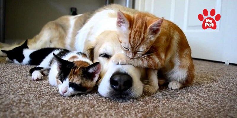 Dấu hiệu chó mèo bị ốm