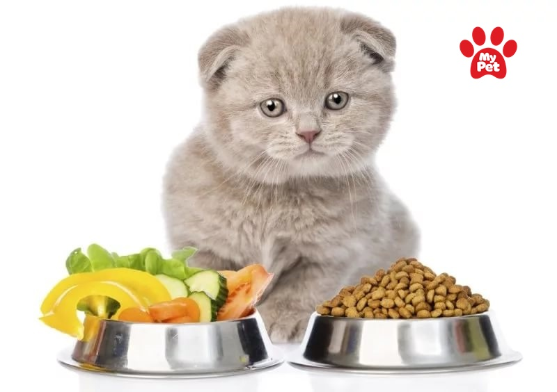 Dinh dưỡng cho mèo con