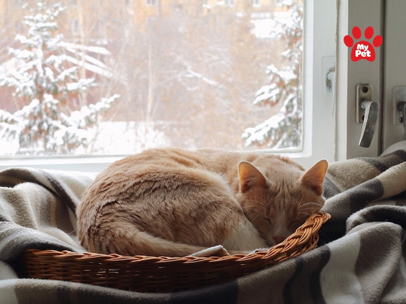 Chú ý giữ ấm cho mèo con khi bị cảm lạnh