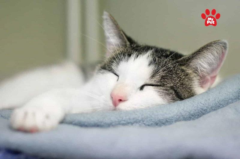 Mèo con bị cảm lạnh do nhiều nguyên nhân khác nhau