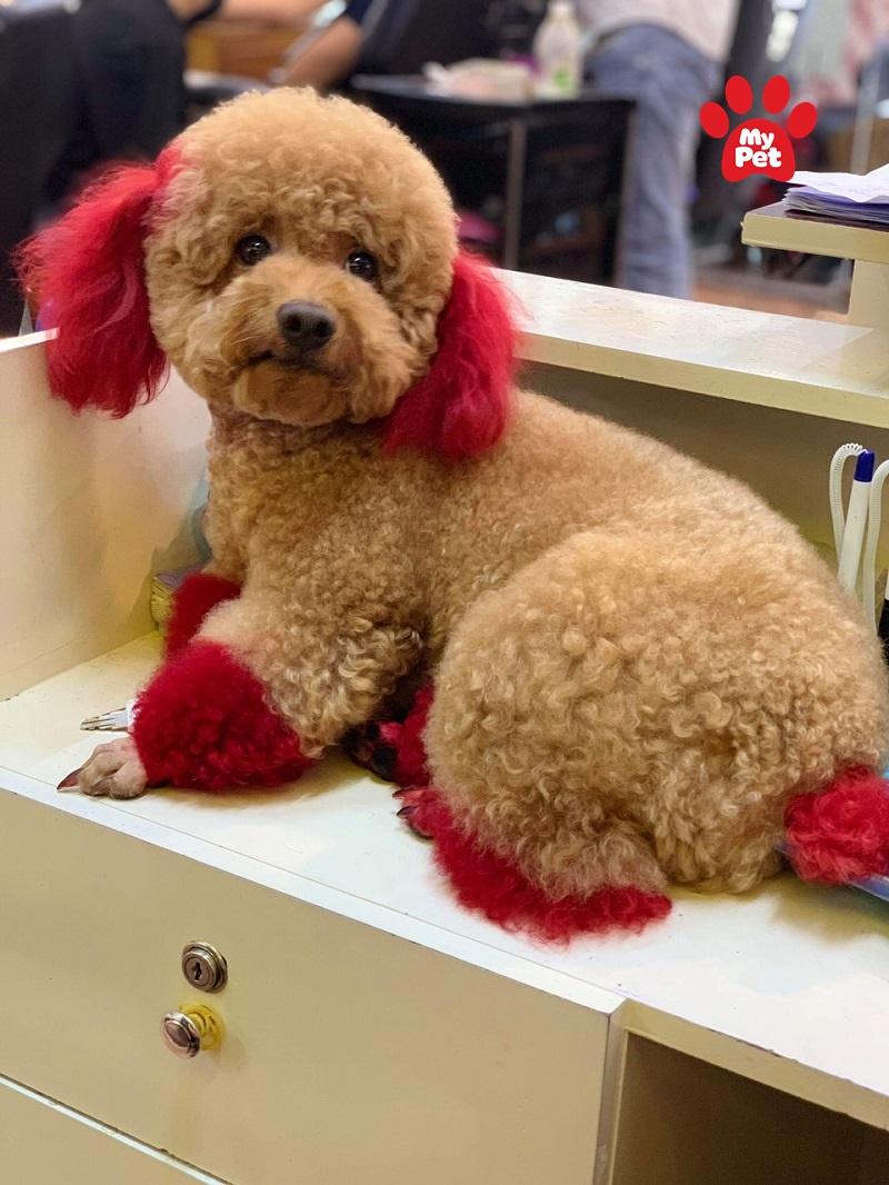 Ngoại hình xinh đẹp của chú chó sau khi nhuộm lông