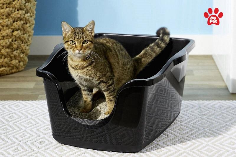Cách giảm bụi trong cát vệ sinh của mèo