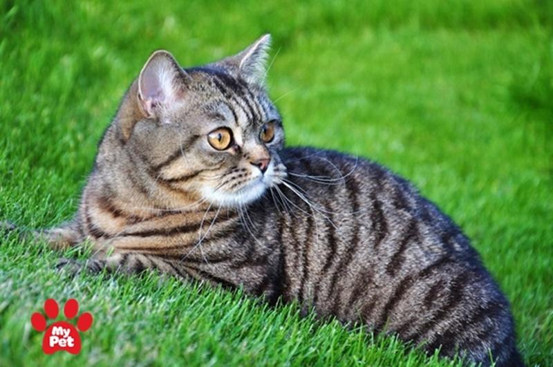 Rất dễ dàng để chăm sóc mèo mướp