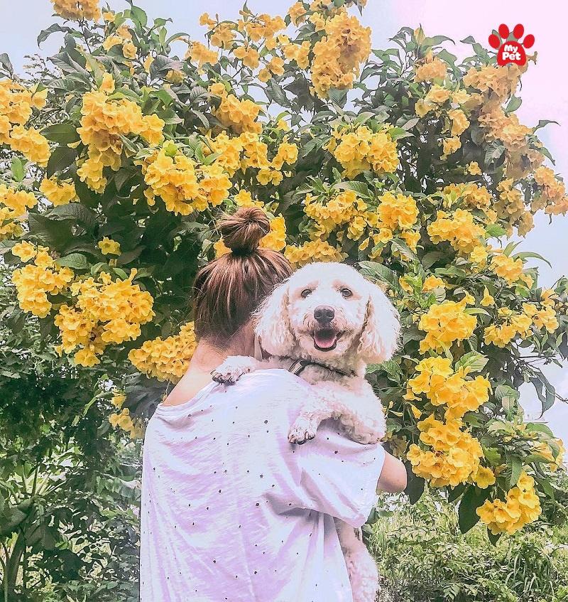 Chú cún cực đáng yêu của Minh Hằng