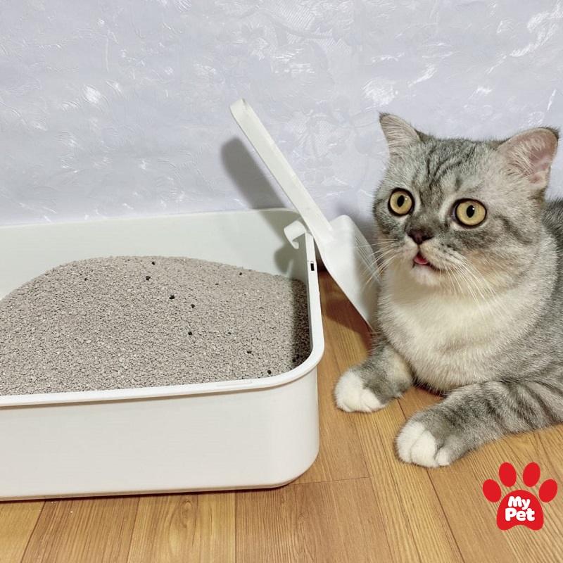 tự làm cát vệ sinh cho mèo