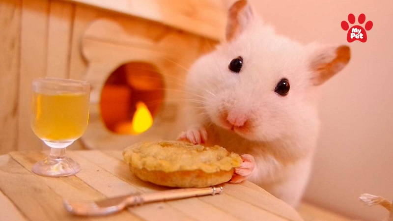Chuột hamster và những điều cần tránh khi nuôi