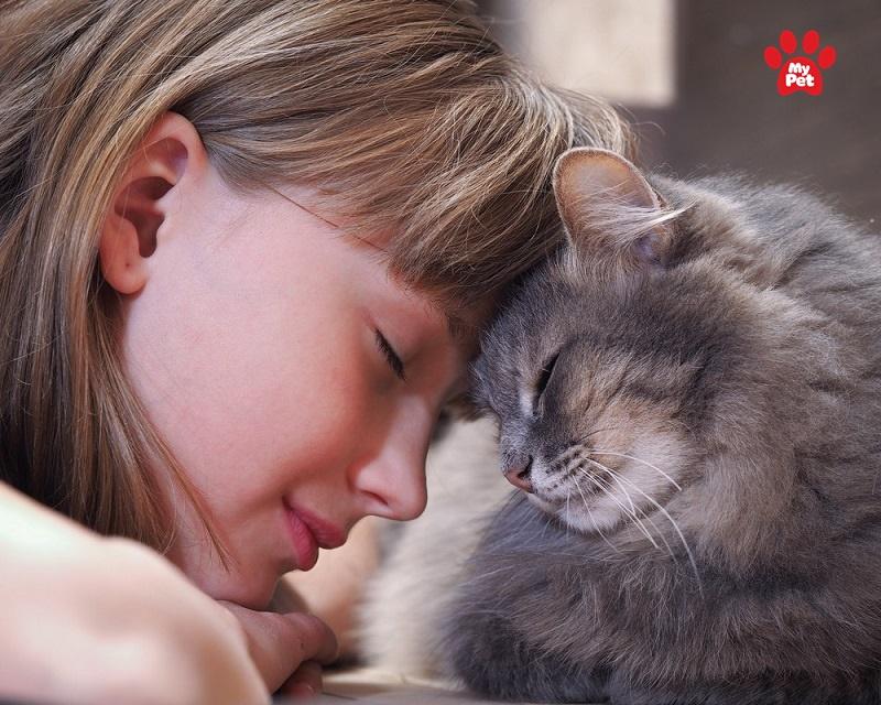 5 căn bệnh dễ lây từ mèo sang người