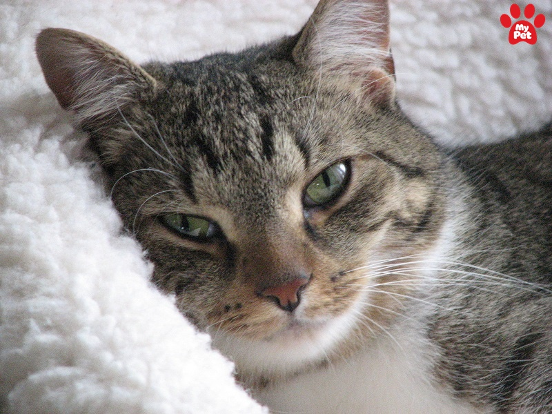 Chăm sóc dinh dưỡng cho mèo lớn tuổi